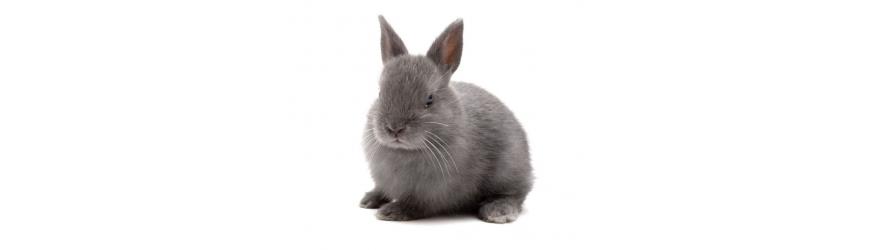 Alimentazione, accessori, prodotti per l'igiene dei conigli nani